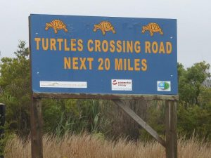 Will Brake For Turtles